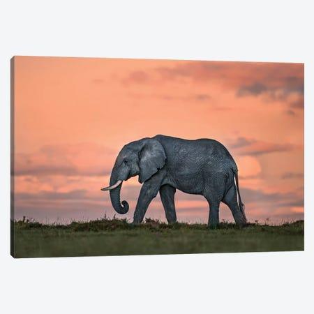 Elephant At Dusk Canvas Print #XOR15} by Xavier Ortega Canvas Wall Art
