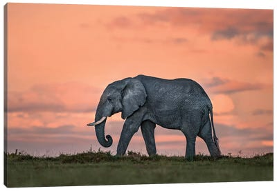 Elephant At Dusk Canvas Art Print