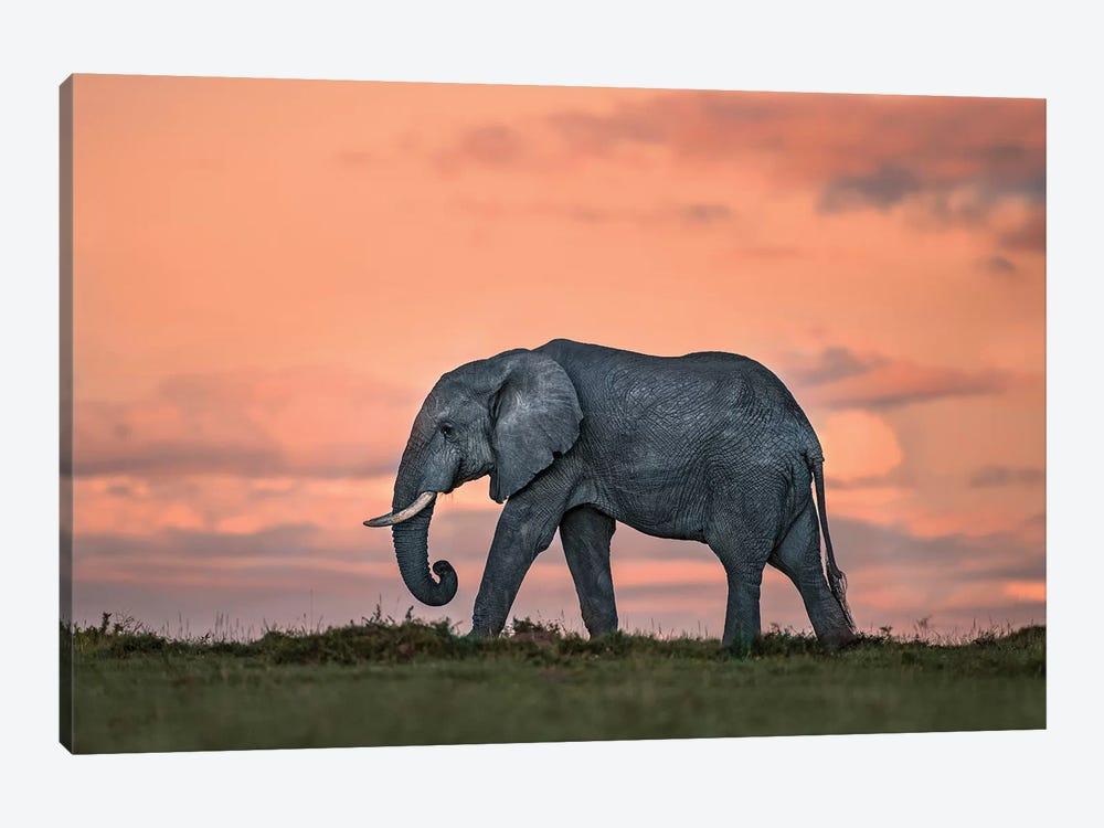 Elephant At Dusk by Xavier Ortega 1-piece Canvas Art