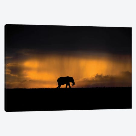 Elephant In A Rain Storm At Sunset Canvas Print #XOR16} by Xavier Ortega Canvas Art