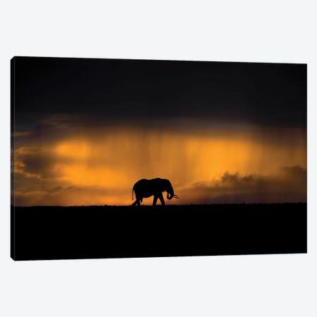 Elephant In A Rain Storm At Sunset Canvas Print #XOR16} by Xavier Ortega Canvas Art