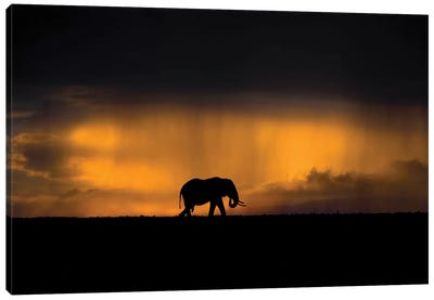 Elephant In A Rain Storm At Sunset Canvas Art Print