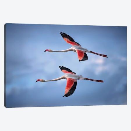 Greater Flamingos Canvas Print #XOR19} by Xavier Ortega Art Print