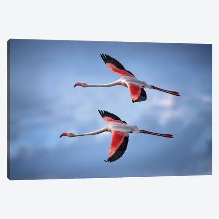 Greater Flamingos Canvas Print #XOR19} by Xavier Ortega Art Print
