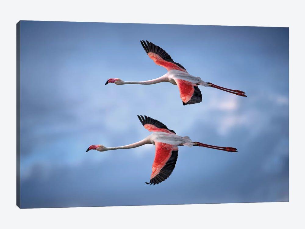 Greater Flamingos by Xavier Ortega 1-piece Canvas Artwork