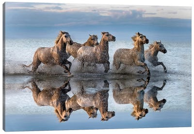 Horses And Reflection Canvas Art Print