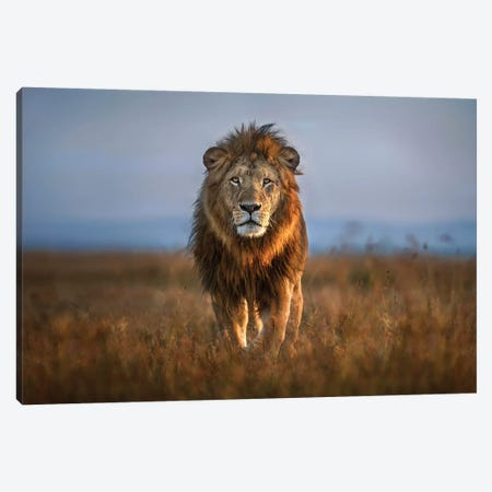 Lion Close Up Canvas Print #XOR21} by Xavier Ortega Canvas Art