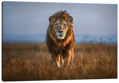 Lion Close Up Canvas Art Print