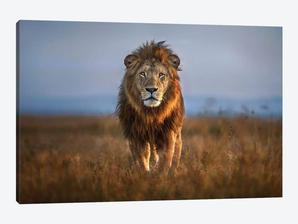 Lion Close Up by Xavier Ortega 1-piece Art Print