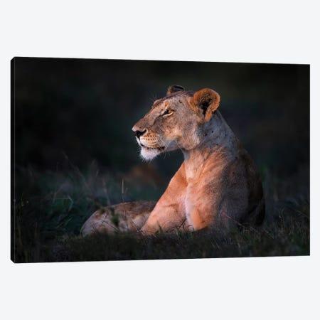 Lone Lioness Canvas Print #XOR23} by Xavier Ortega Canvas Wall Art