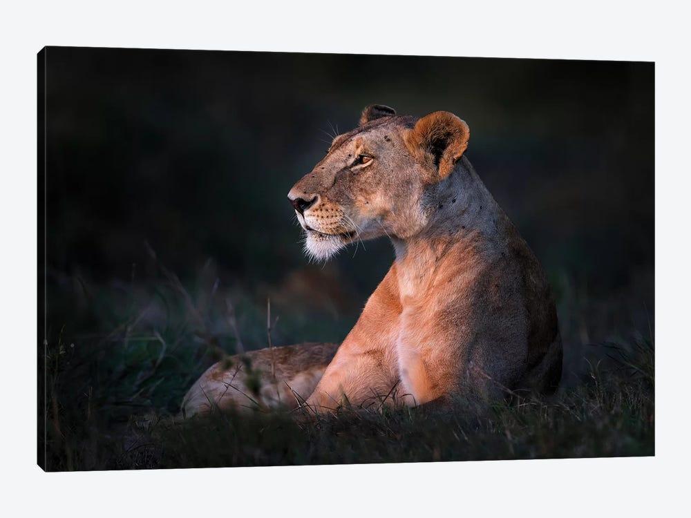 Lone Lioness by Xavier Ortega 1-piece Canvas Print