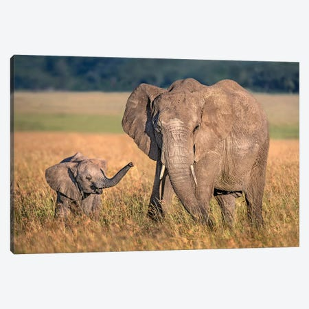 Mom Elephant With Calf Canvas Print #XOR26} by Xavier Ortega Art Print