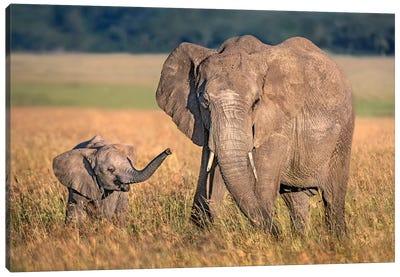 Mom Elephant With Calf Canvas Art Print