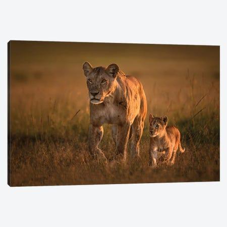 Mom Lioness With Cub Canvas Print #XOR27} by Xavier Ortega Canvas Art Print