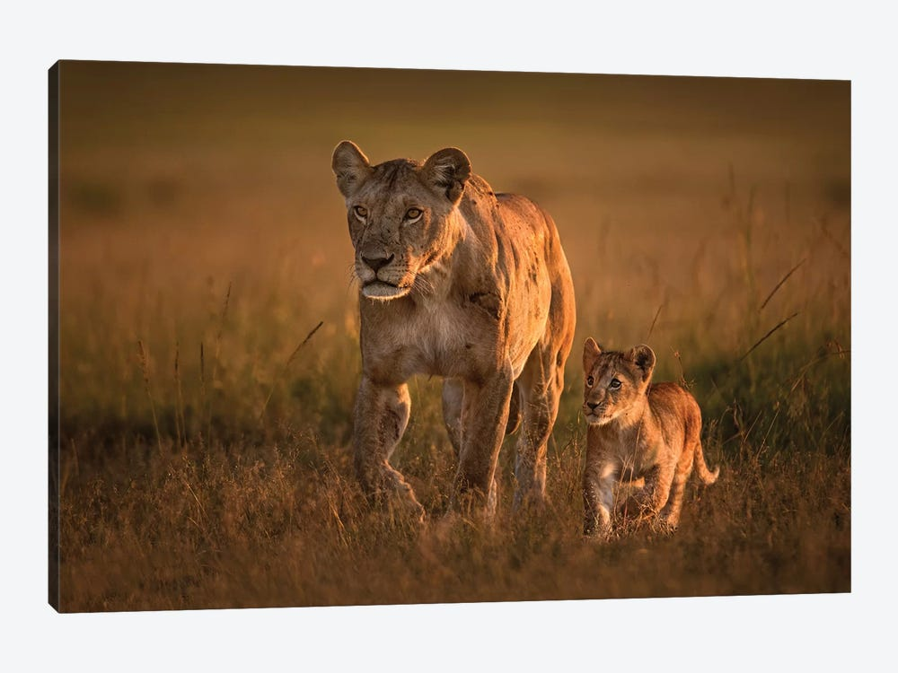 Mom Lioness With Cub by Xavier Ortega 1-piece Canvas Art Print