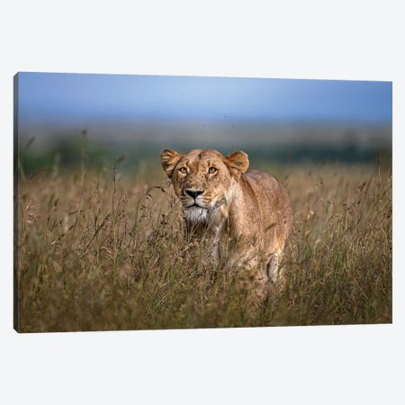 On The Prowl Canvas Print #XOR28} by Xavier Ortega Canvas Art