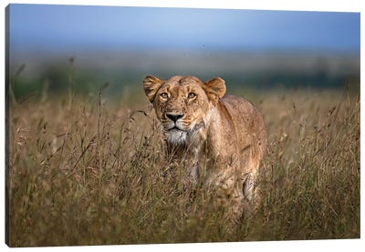 On The Prowl Canvas Art Print