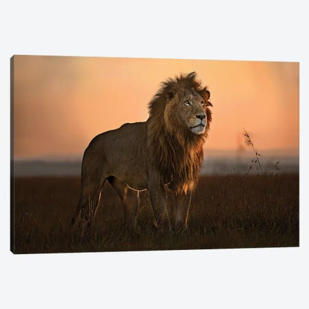 The King In The Morning Light Canvas Print #XOR29} by Xavier Ortega Canvas Wall Art