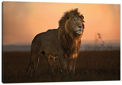 The King In The Morning Light Canvas Art Print