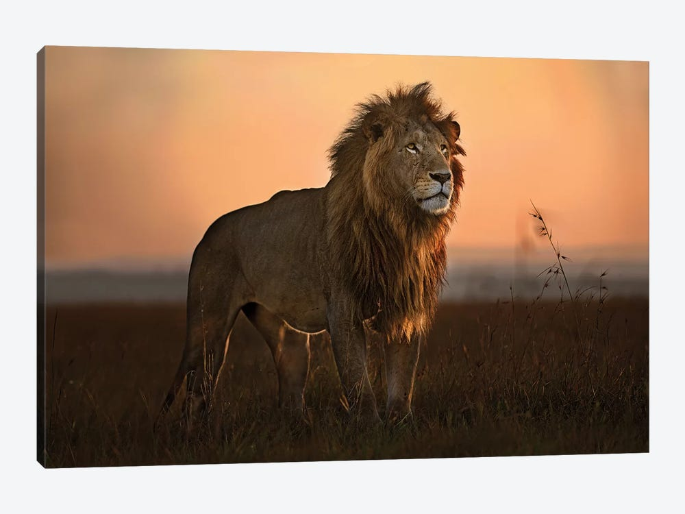 The King In The Morning Light by Xavier Ortega 1-piece Canvas Print