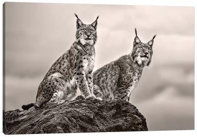 Two Lynx On Rock Canvas Art Print