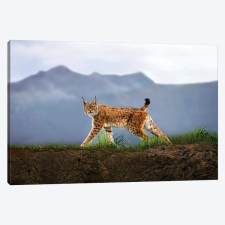 Walking Lynx Canvas Print #XOR31} by Xavier Ortega Art Print