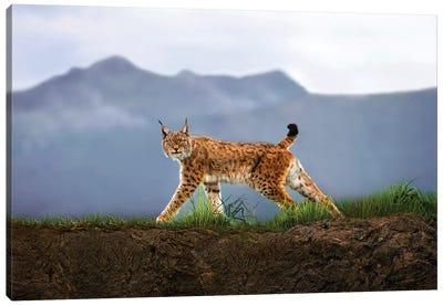 Walking Lynx Canvas Art Print