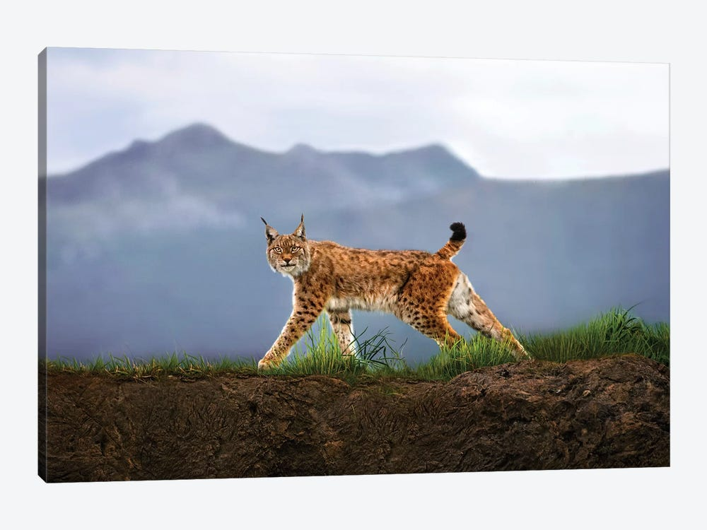 Walking Lynx by Xavier Ortega 1-piece Canvas Wall Art