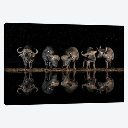 Buffaloes In The Waterhole At Night Canvas Print #XOR32} by Xavier Ortega Art Print