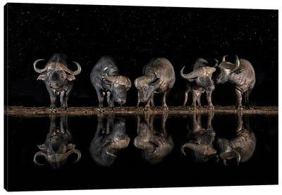 Buffaloes In The Waterhole At Night Canvas Art Print