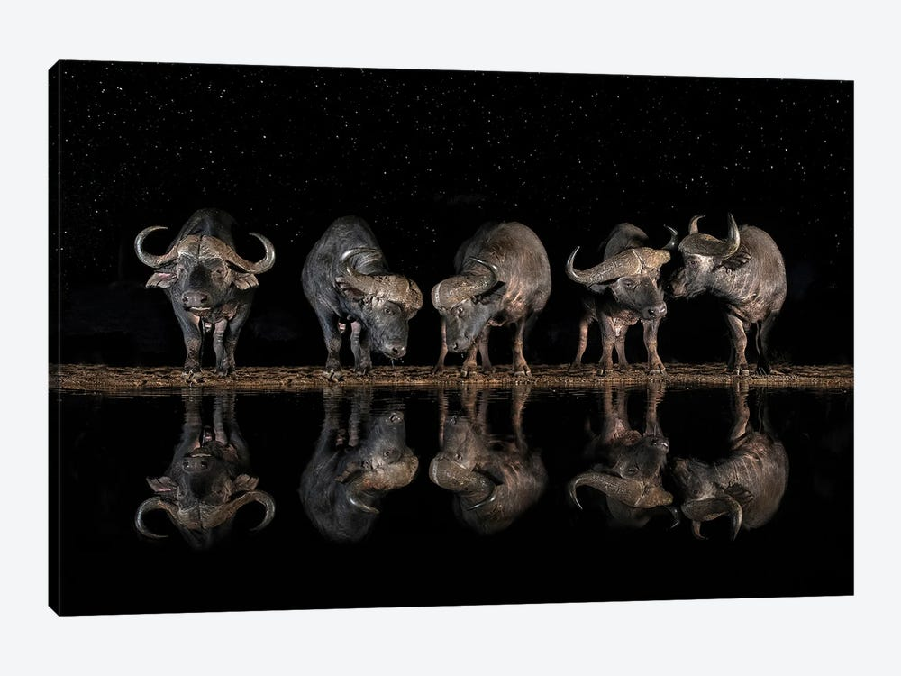 Buffaloes In The Waterhole At Night by Xavier Ortega 1-piece Canvas Print