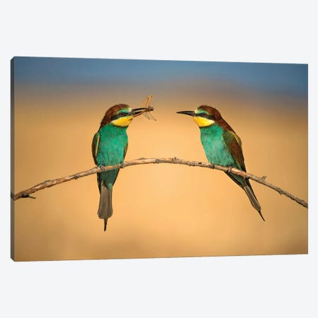 Bee-Eater Canvas Print #XOR35} by Xavier Ortega Canvas Artwork