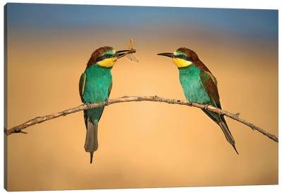 Bee-Eater Canvas Art Print