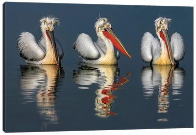 Dalmatian Pelicans Portrait Canvas Art Print