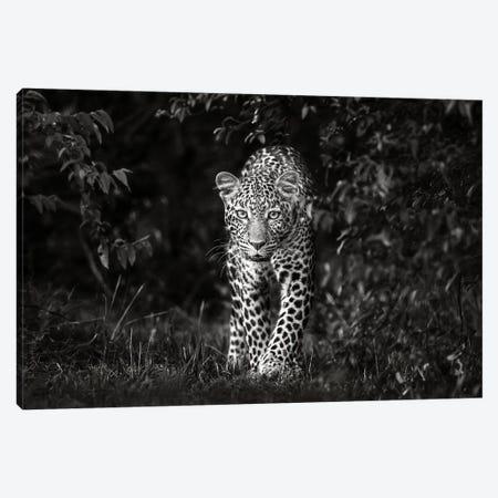 Leopard, Eye To Eye Canvas Print #XOR37} by Xavier Ortega Canvas Wall Art
