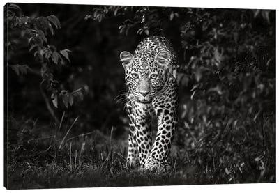 Leopard, Eye To Eye Canvas Art Print