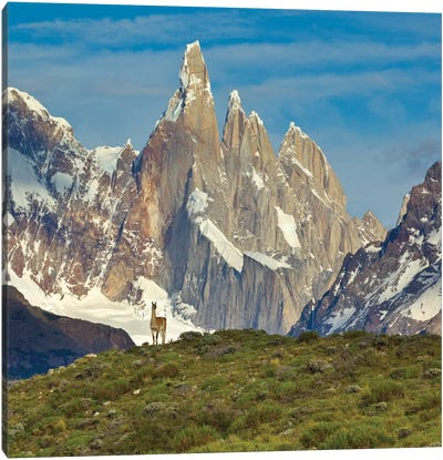 Guanaco, Cerro Torre, Los Glaciares National Park, Patagonia, Argentina Canvas Art Print
