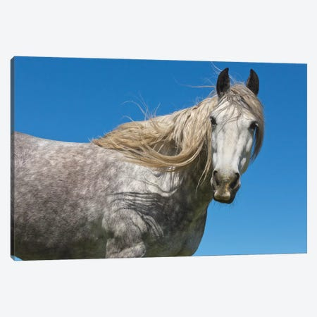 Horse In Spring, Los Glaciares National Park, Patagonia, Argentina Canvas Print #YAJ6} by Yva Momatiuk & John Eastcott Canvas Wall Art
