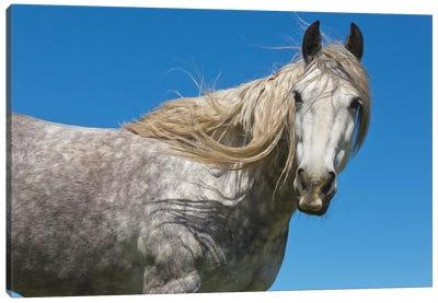 Horse In Spring, Los Glaciares National Park, Patagonia, Argentina Canvas Art Print