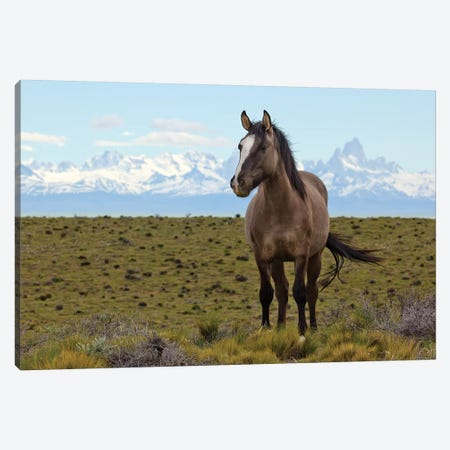 Horses In Spring, Fitzroy Massif, Los Glaciares National Park, Patagonia, Argentina Canvas Print #YAJ7} by Yva Momatiuk & John Eastcott Canvas Art