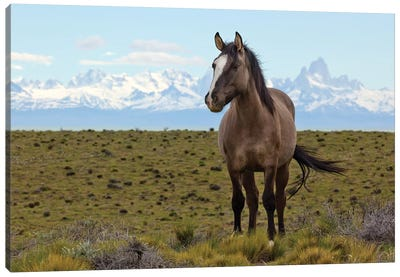 Horses In Spring, Fitzroy Massif, Los Glaciares National Park, Patagonia, Argentina Canvas Art Print