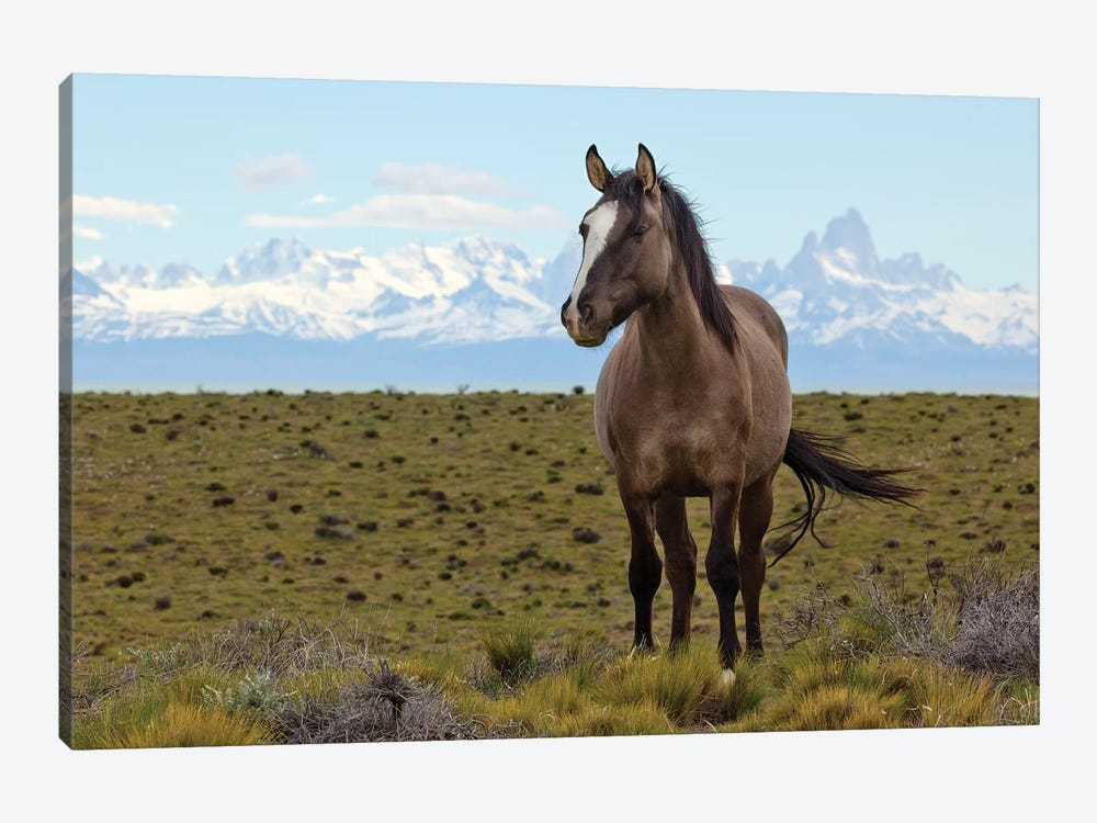 Horses In Spring, Fitzroy Massif, Los Glaciares National Park, Patagonia, Argentina by Yva Momatiuk & John Eastcott 1-piece Canvas Artwork