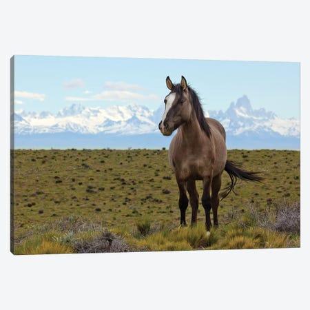 Horses In Spring, Fitzroy Massif, Los Glaciares National Park, Patagonia, Argentina Canvas Print #YAJ7} by Yva Momatiuk & John Eastcott Canvas Art