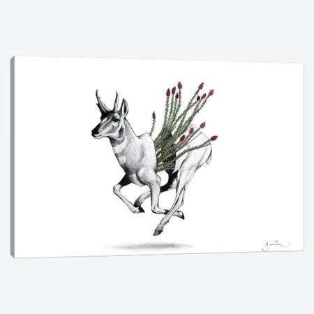 Pronghorn Canvas Print #YAR21} by Yanin Ruibal Art Print