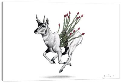 Pronghorn Canvas Art Print