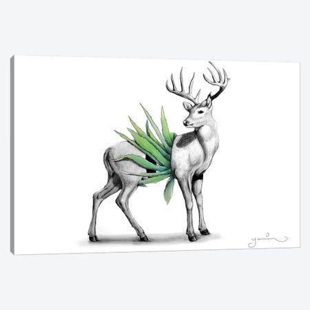 Whitetail Canvas Print #YAR28} by Yanin Ruibal Canvas Art Print