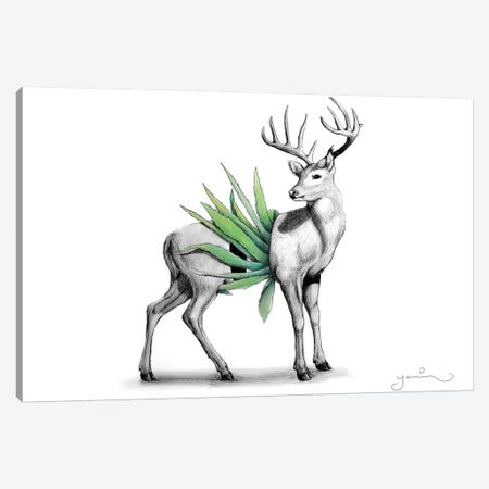 Whitetail Canvas Print #YAR28} by Yanin Ruibal Canvas Art Print