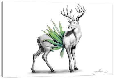 Whitetail Canvas Art Print