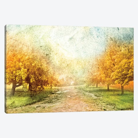 Oak Path Canvas Print #YBM44} by Ynon Mabat Canvas Art Print