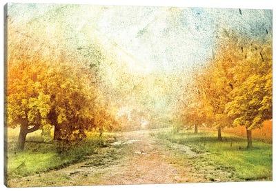 Oak Path Canvas Art Print